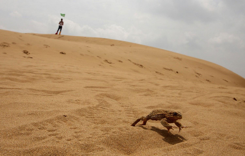 лягушка в песке