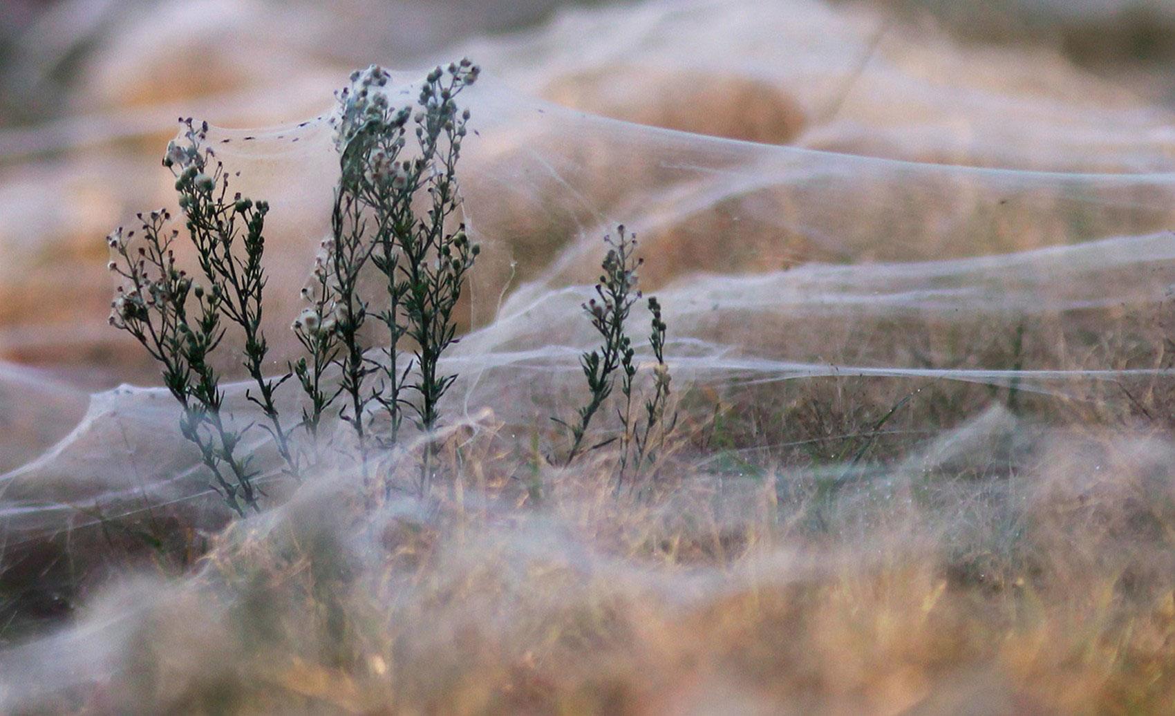Поле, покрытое паутиной, фото
