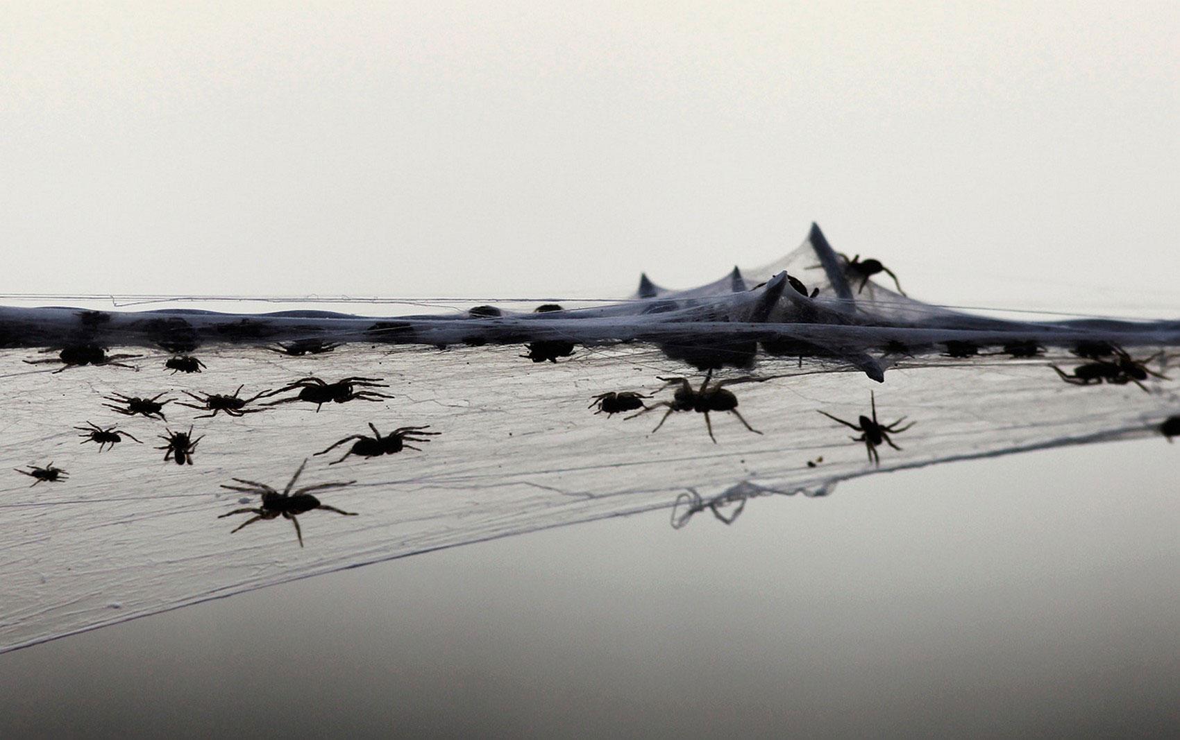 Колючая проволока покрытая паутиной, фото
