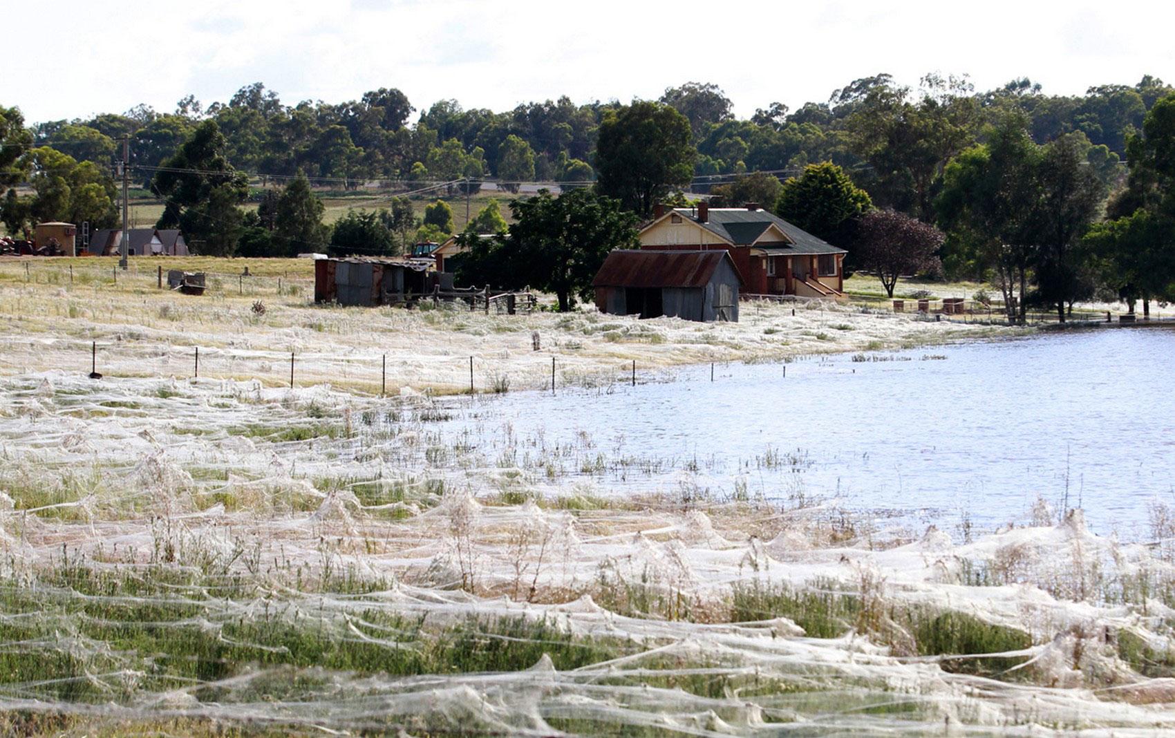 Дома, окруженные паутиной, фото