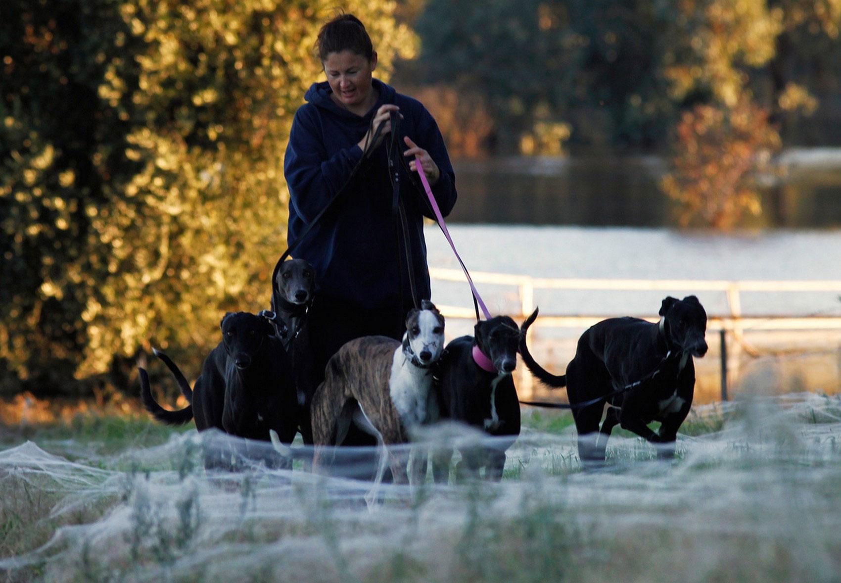 женщина с собаками пробирается через паутину, фото