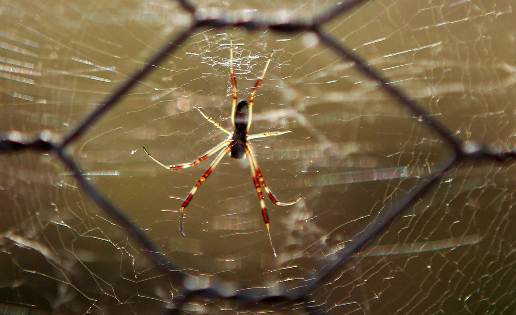 паук на паутине, фото