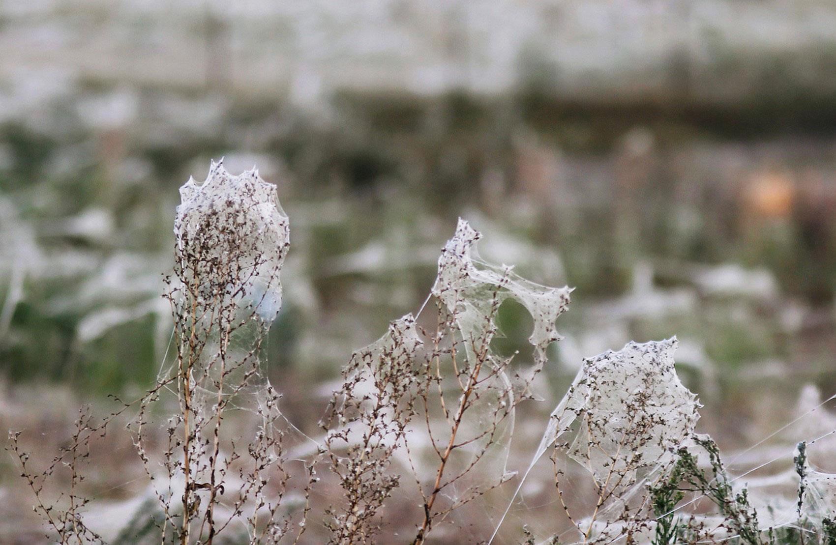 Дикие растения в пауках и паутине, фото