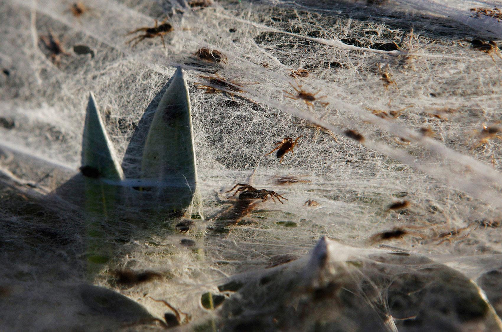Пауки ползают по паутине, фото