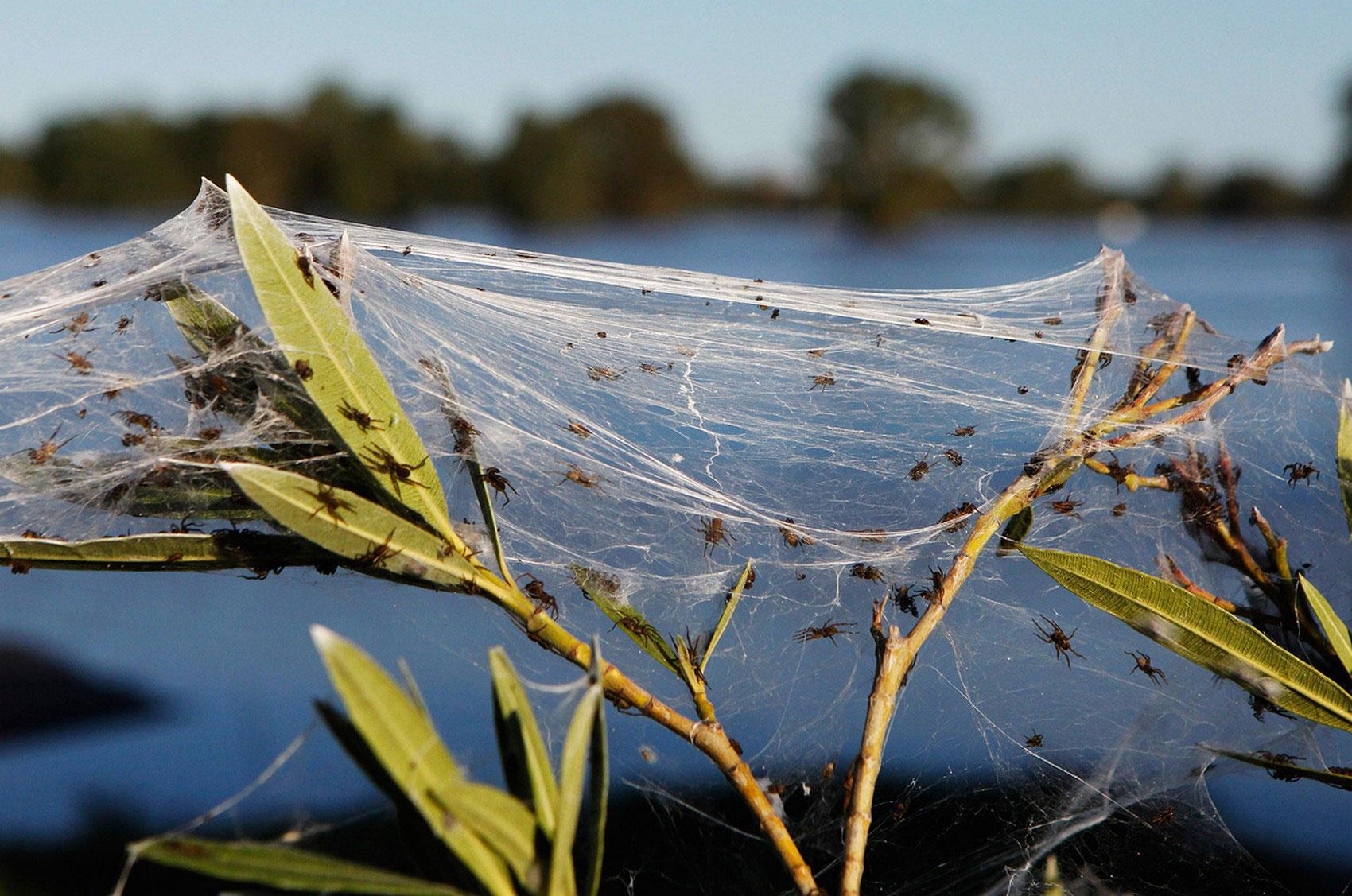 поле в паутине, фото