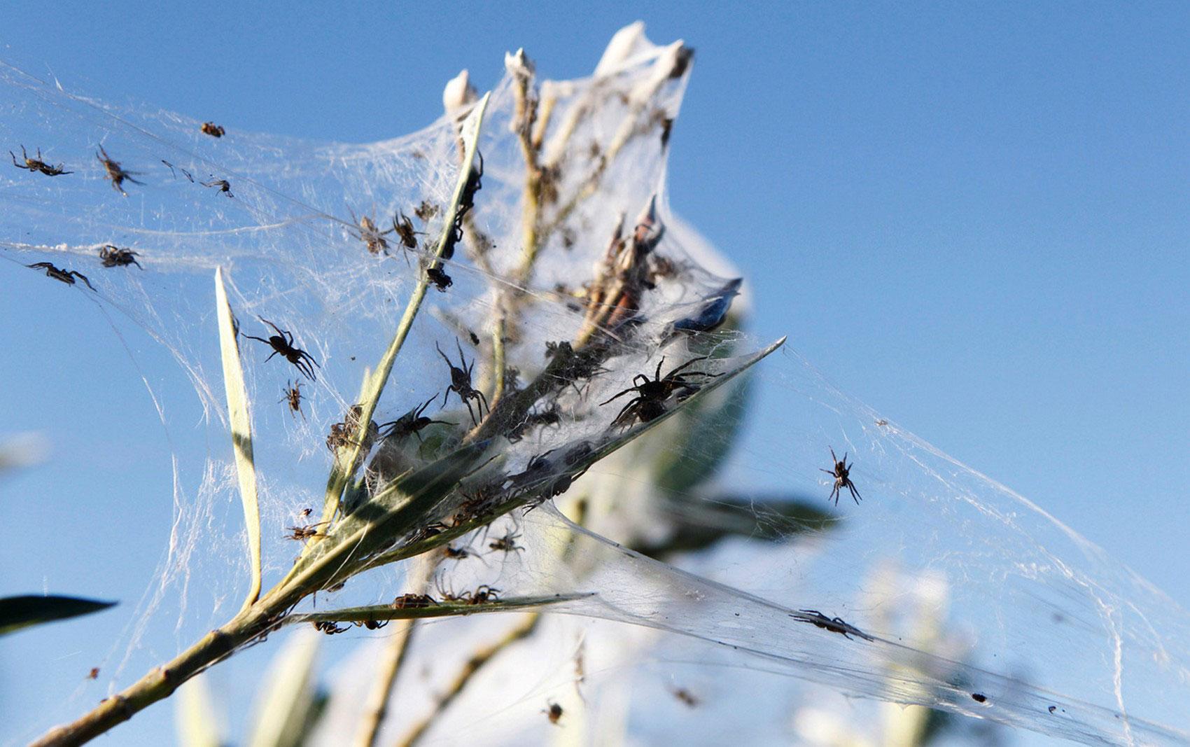 насекомые на растениях, фото