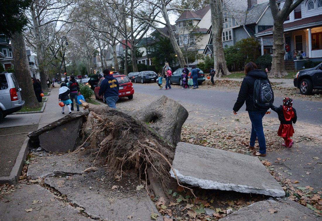 распиленное и убранное с проезжей части Бруклина дерево, фото