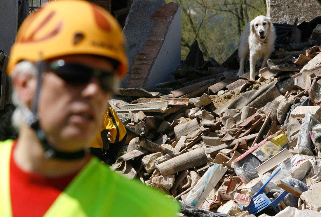 Собака ищет пострадавших людей на руинах в Италии, фото