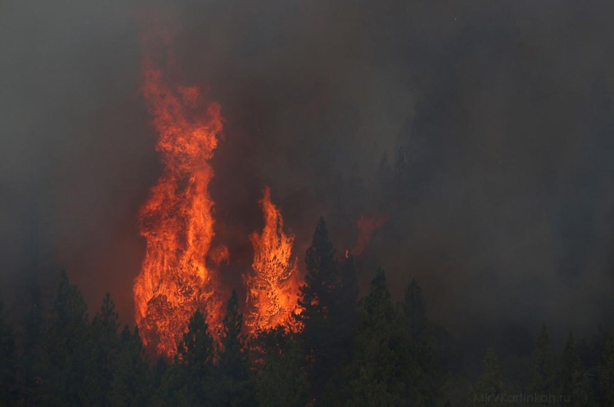 Пламя пожирает деревья