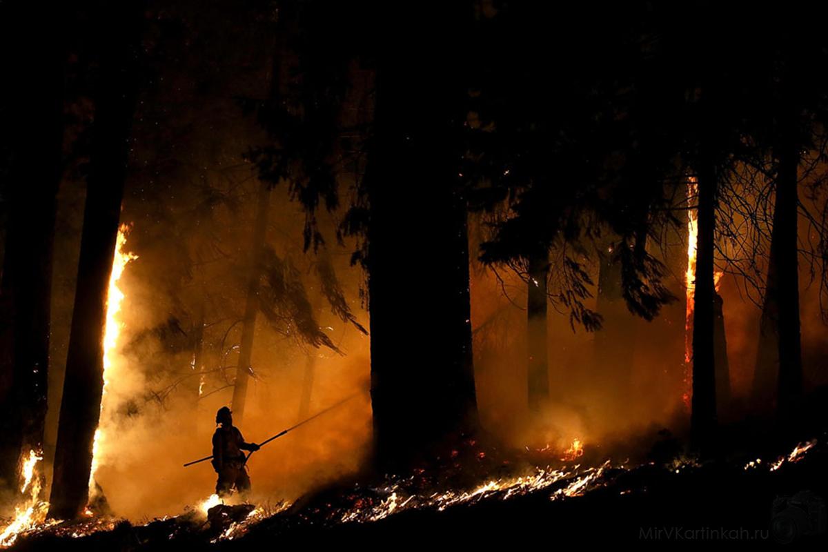 Пожарный тушит ствол дерева