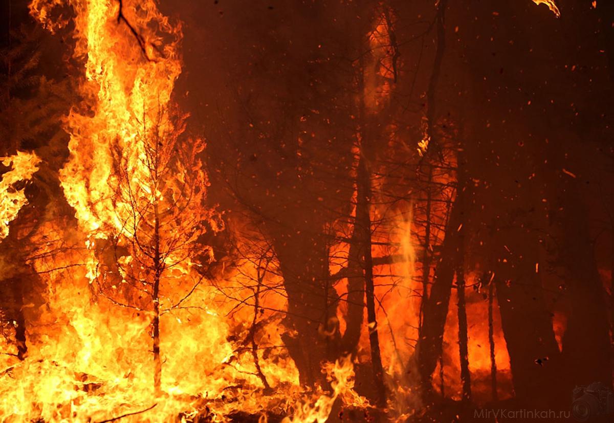 Деревья охвачены пламенем