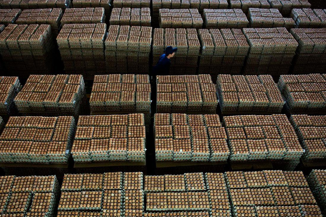 яйца на фабрике в Китае, фото