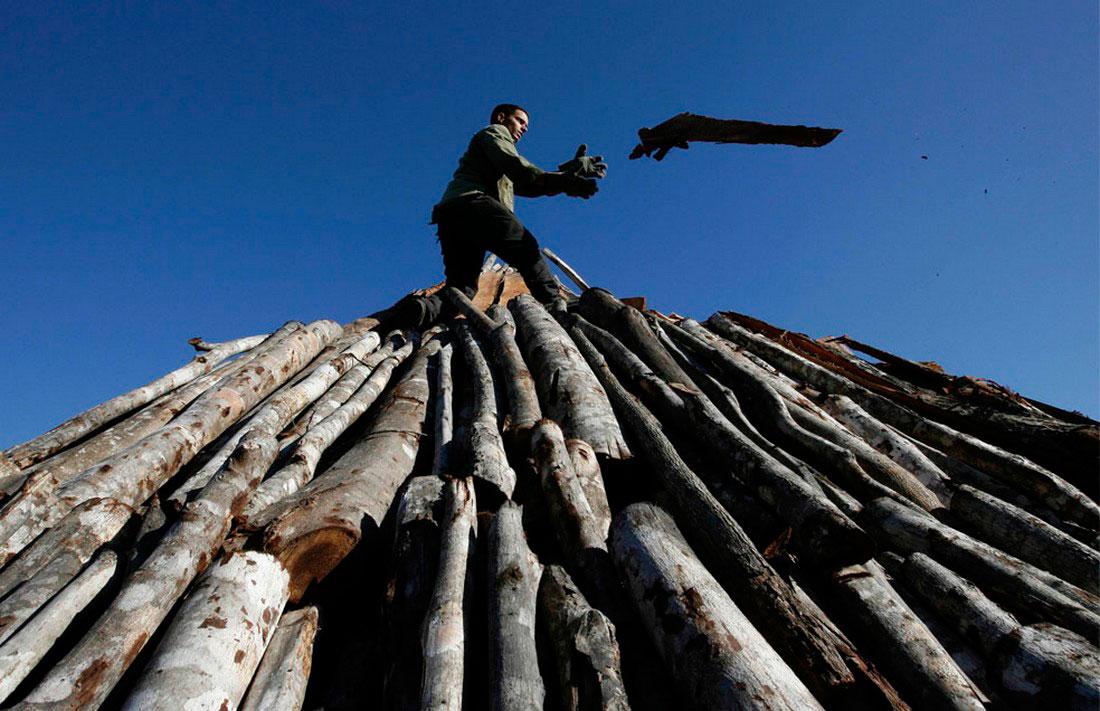 На фабрике по обработки древесины, фото