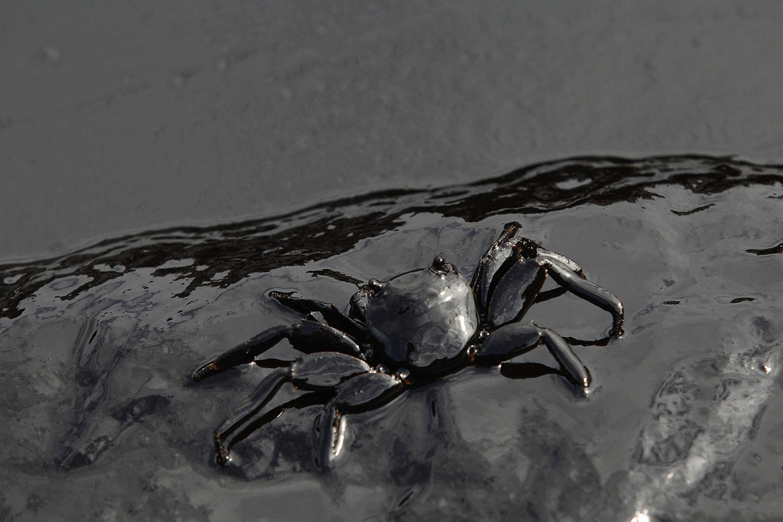 краб в нефти