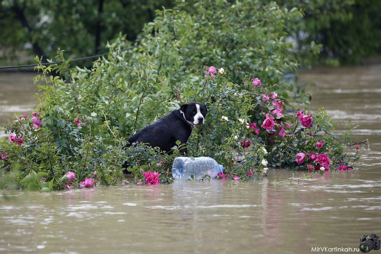 Собака на затопленной улице