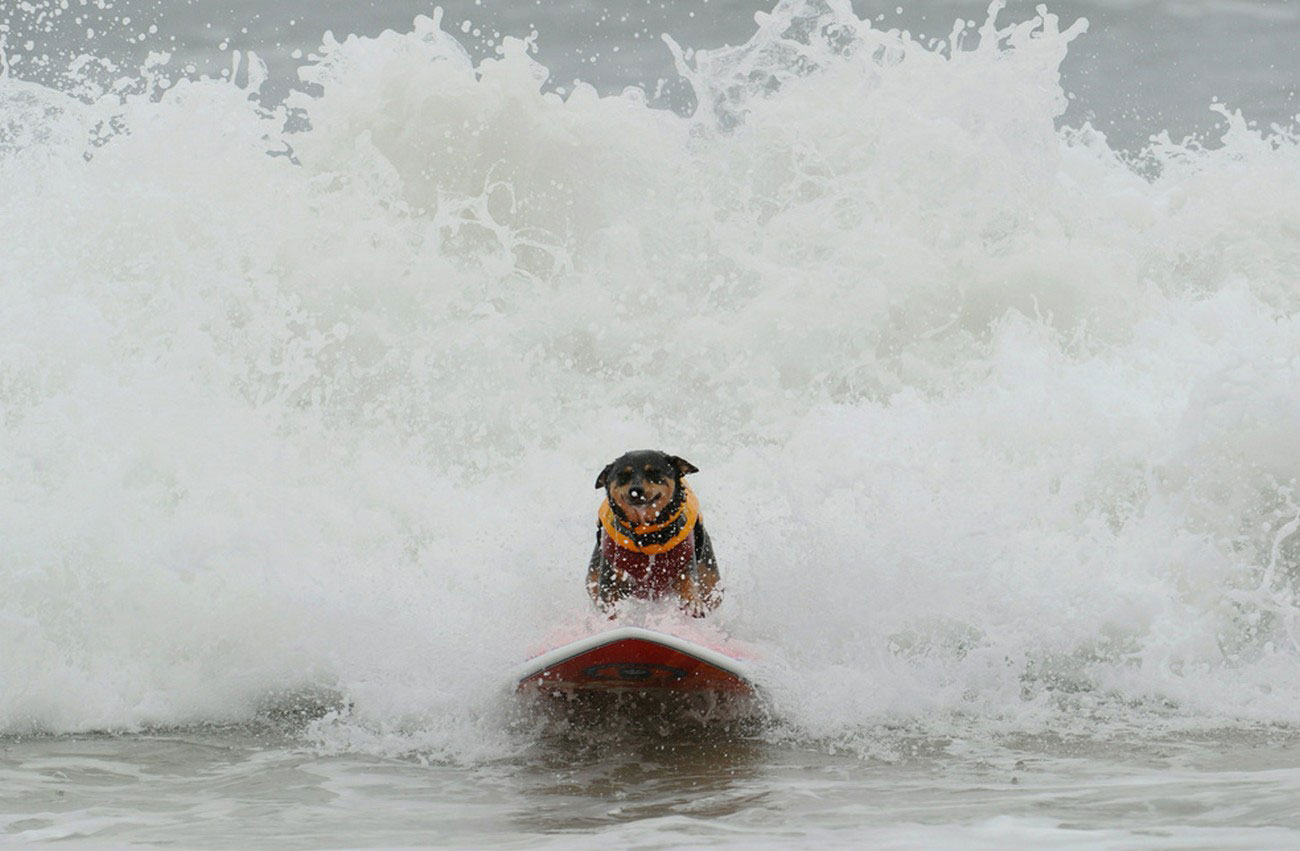 собака-серфингист, фото