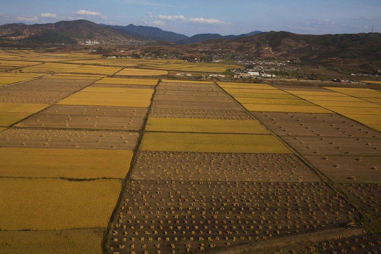 ферма, фото