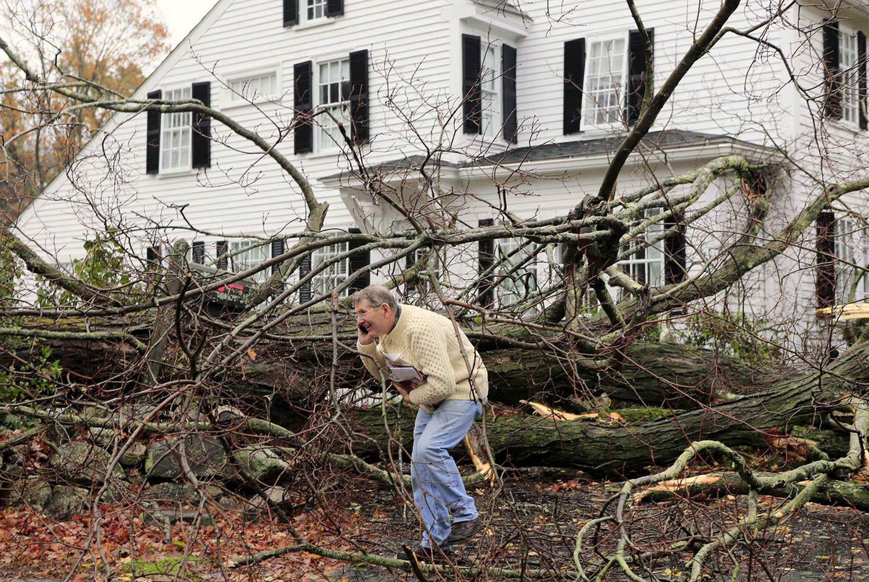 поваленные деревья после шторма Sandy, фото