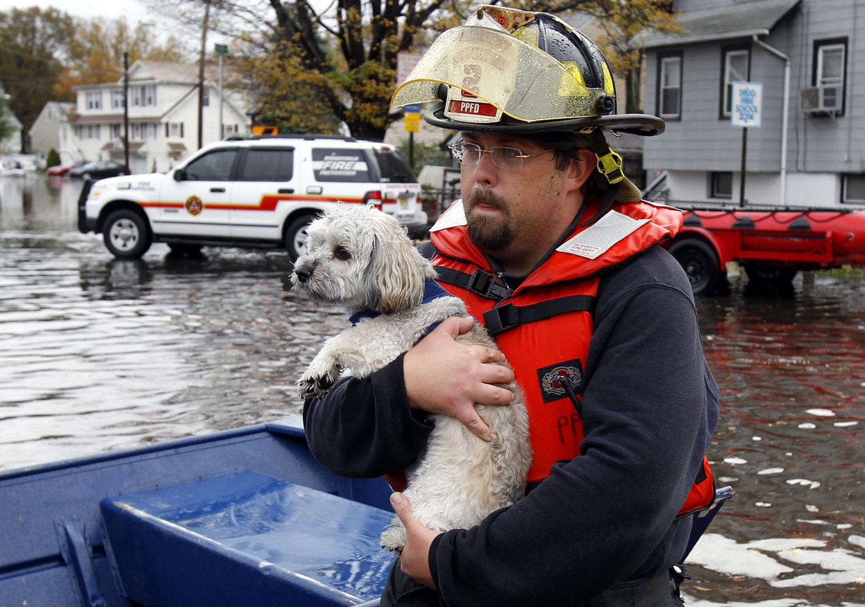 пожарный спасает собаку, фото