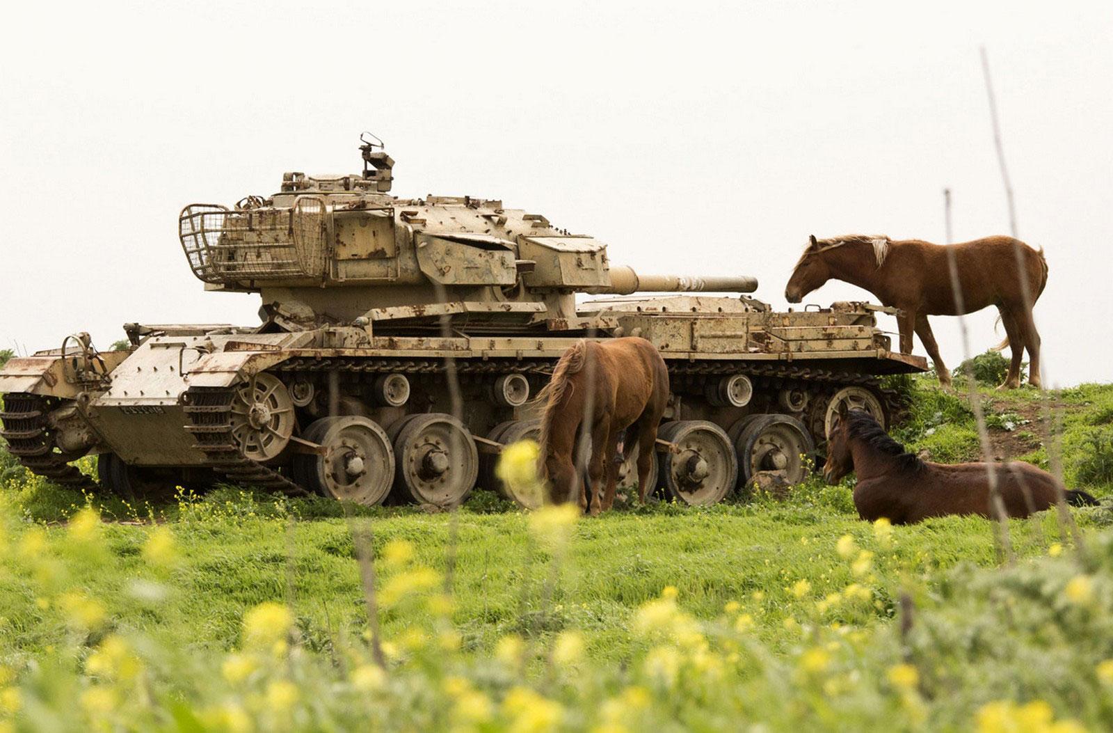 лошади пасутся возле танка, фото