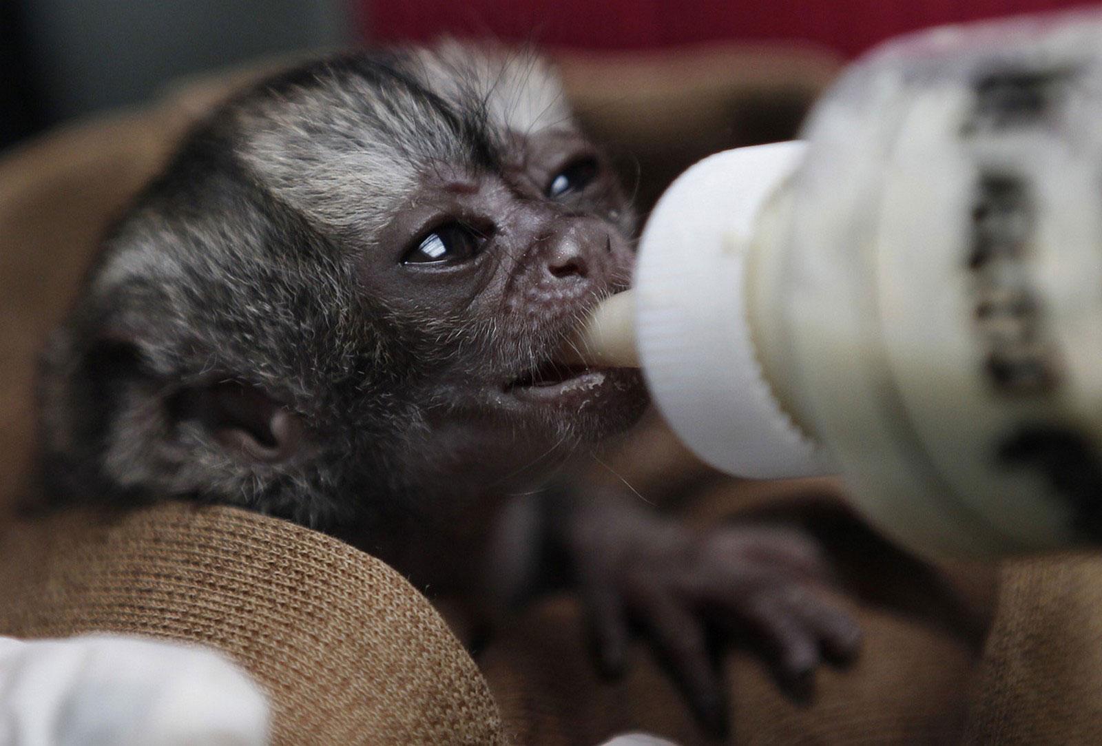 детеныш обезьяны