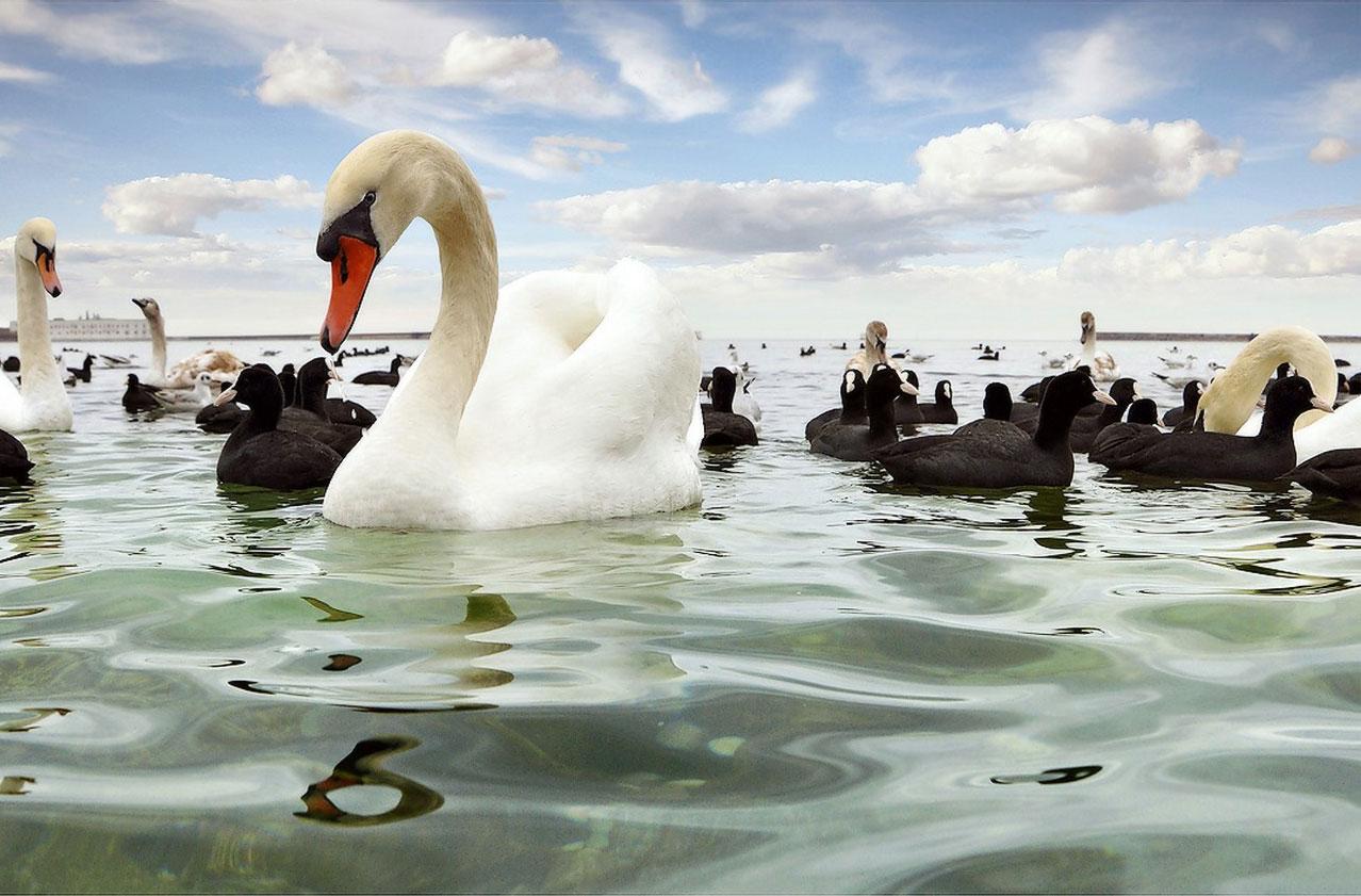 купание птиц, фото