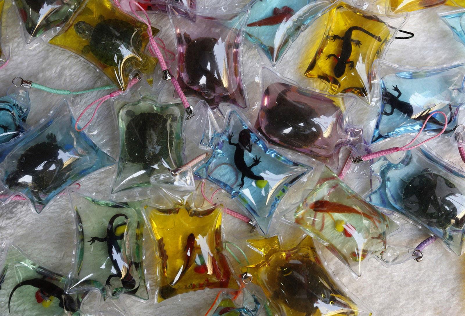 сувениры с живыми рептилиями, фото