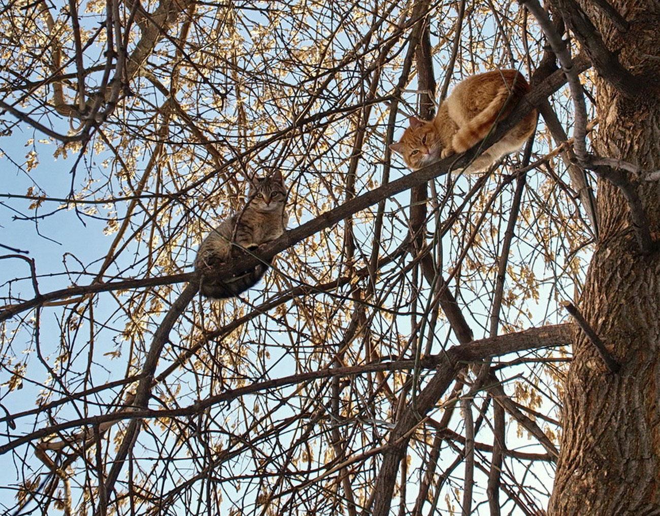 коты на дереве, фото