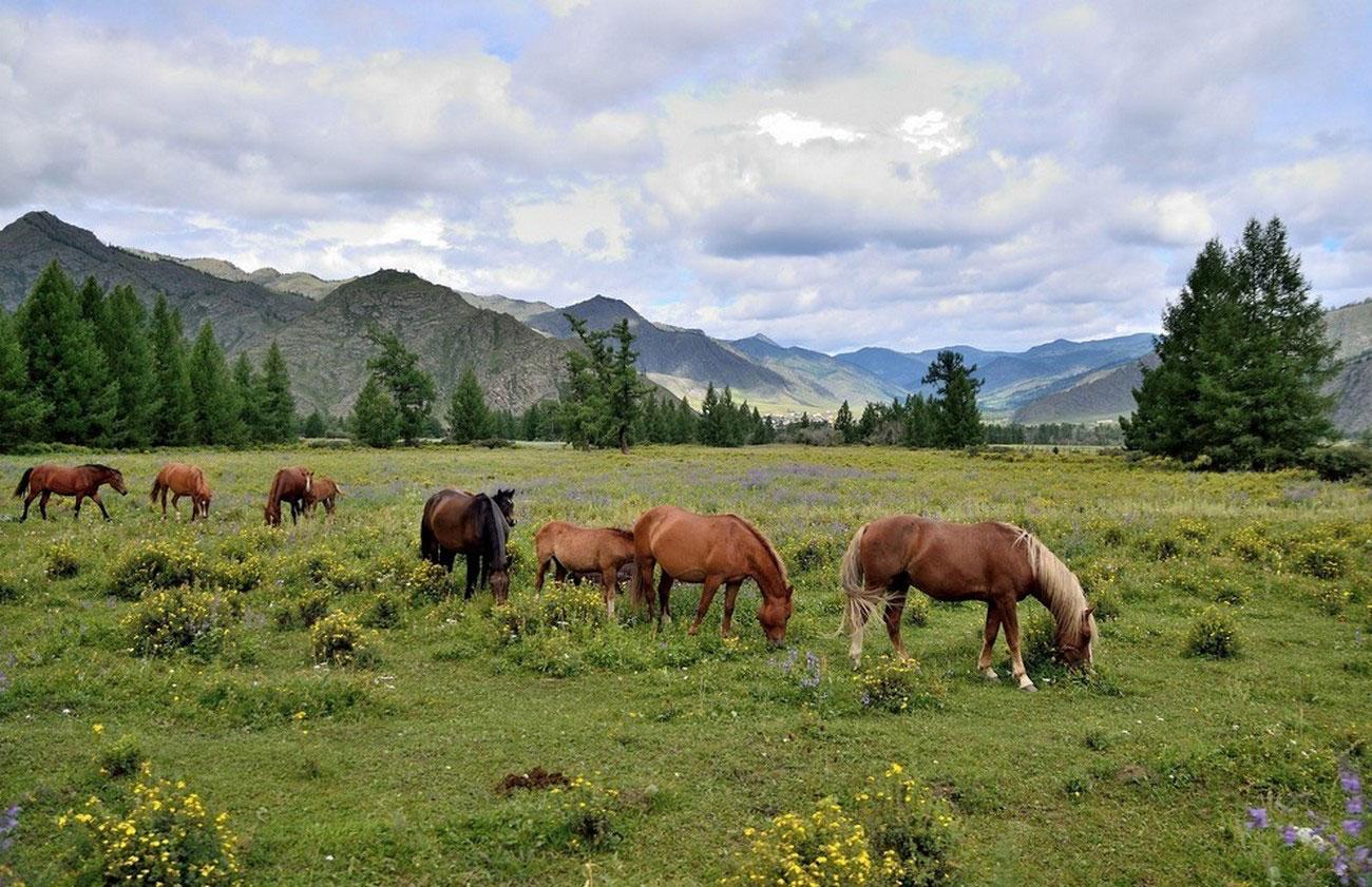 лошади, фото