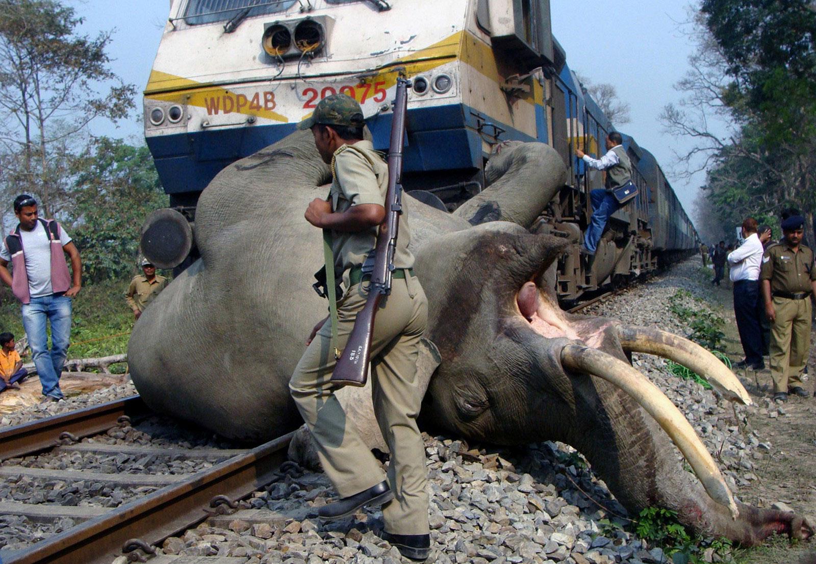 слона сбил поездо