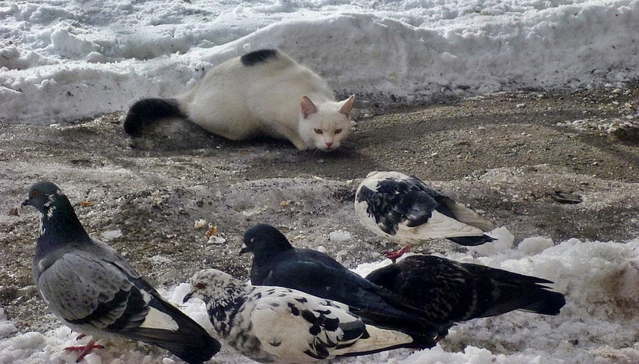кот охотится на птиц