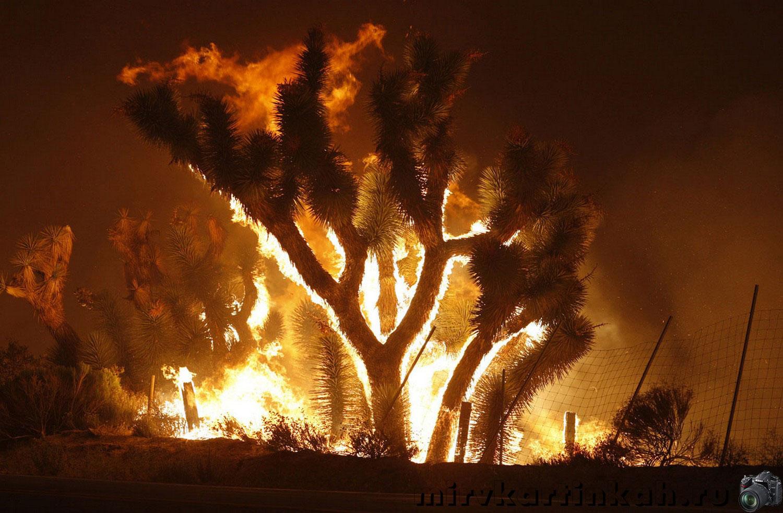 Огонь пожирает юкки