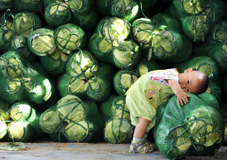 ребенок с капустой