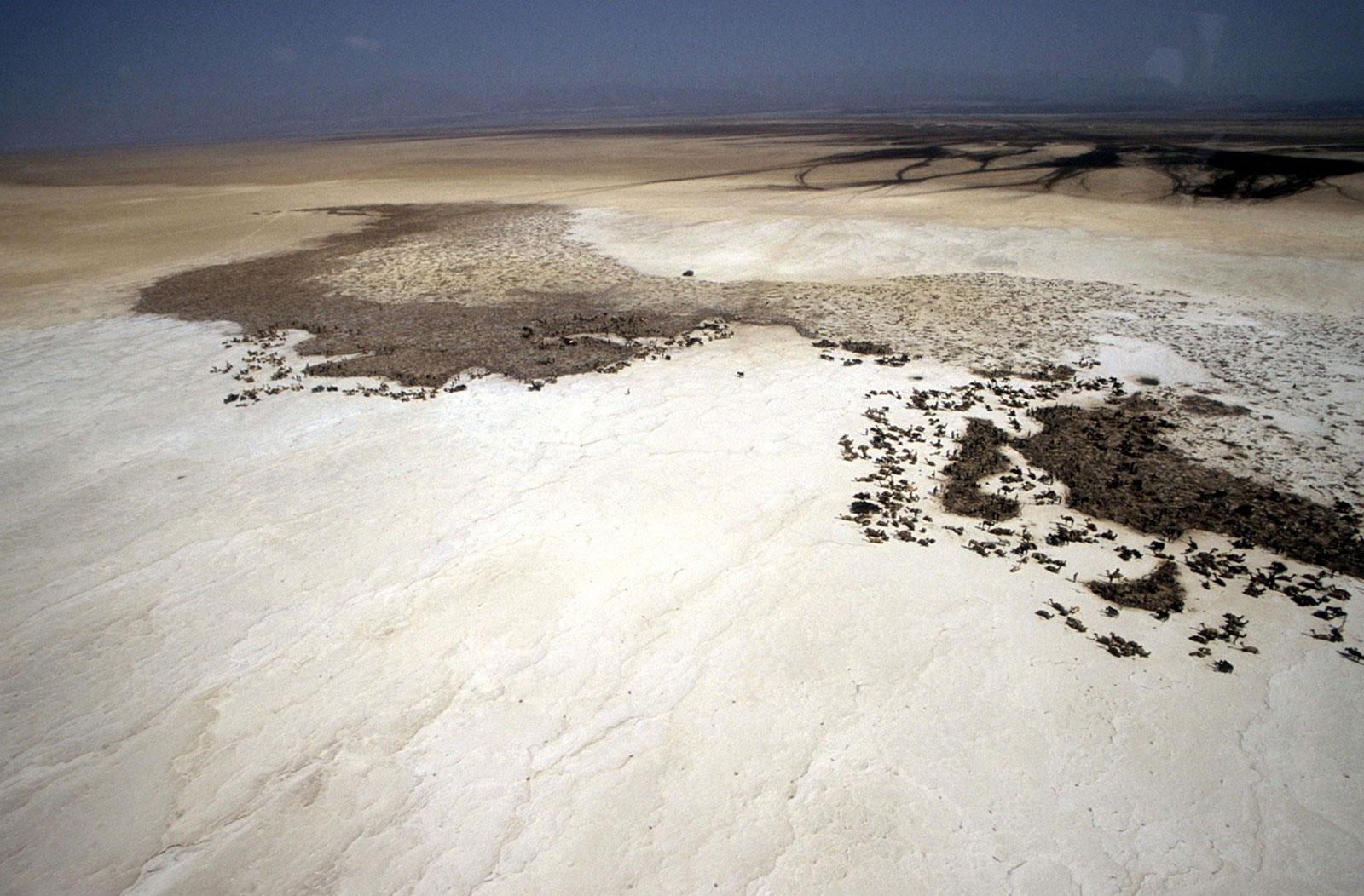 Караван верблюдов в эфиопской впадине