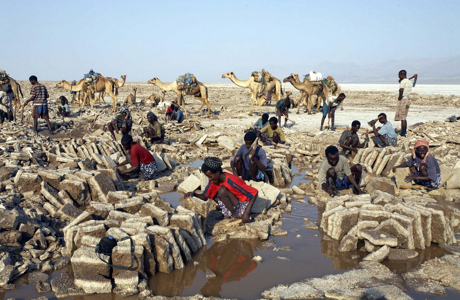 блоки соли из Данакиль