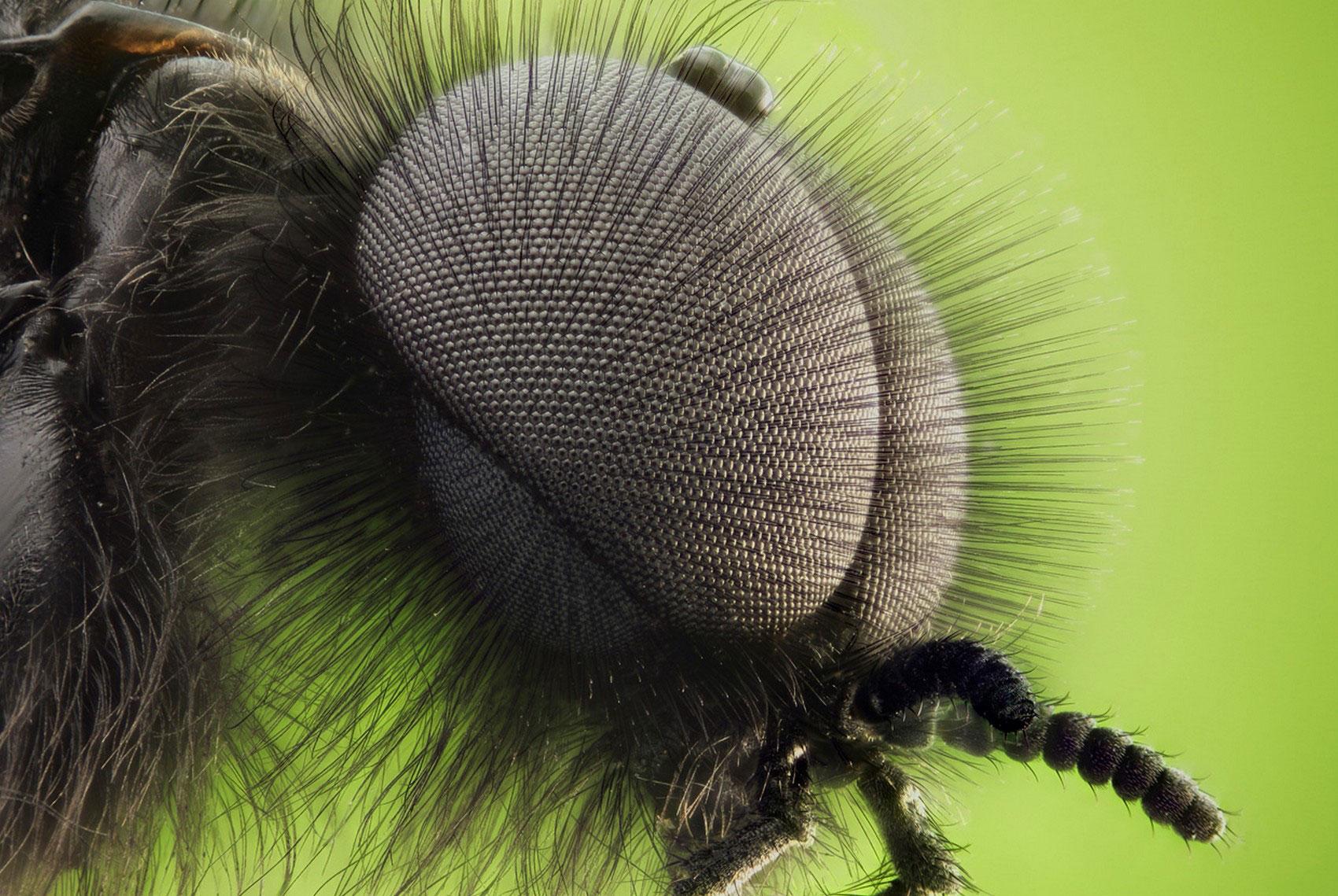 глаза комара под микроскопом
