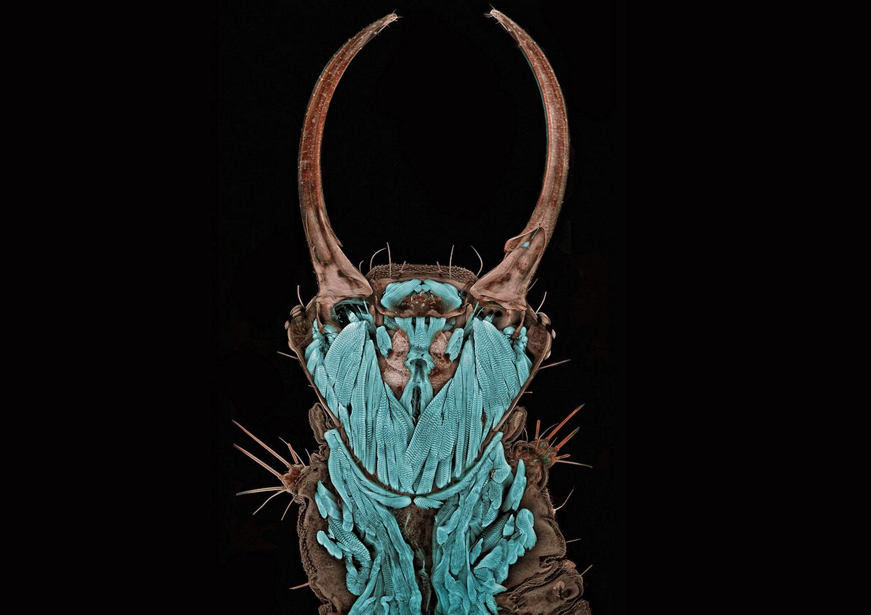 портрет личинки златоглазки, фото