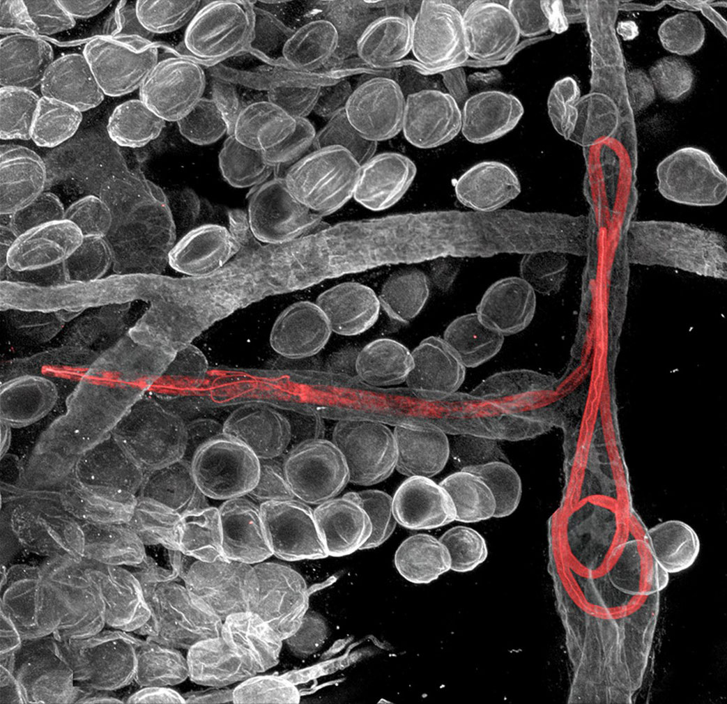 Червь-паразит, фото