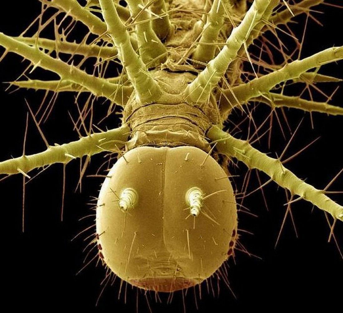 гусеница, фото