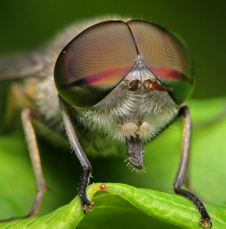 муха в траве, фото насекомого