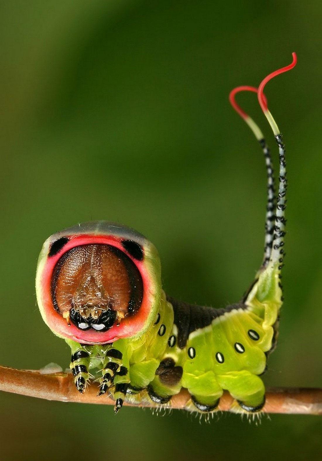 гусеница зеленая, фото