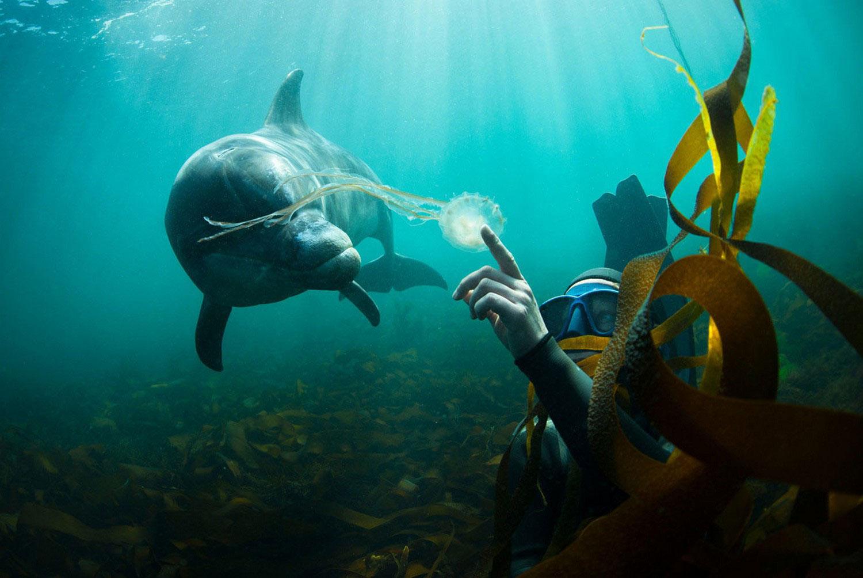 аквалангист с дельфином