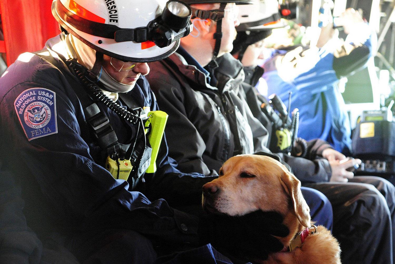 спасатель с собакой в Америке