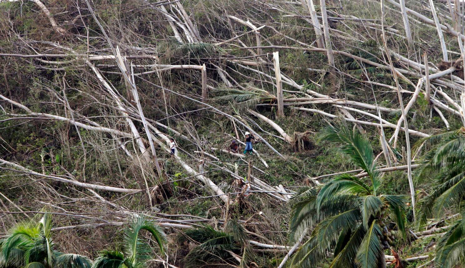 выкорчеванные с корнем деревья, фото