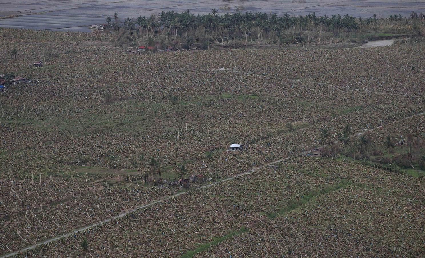 гибель сельскохозяйственных культур в наводнении, фото