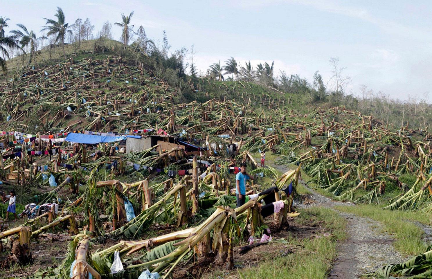 самодельные палатки на убитой банановой плантации, фото с Филиппин
