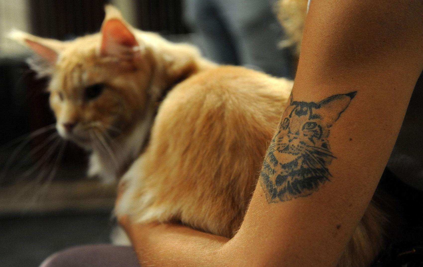 на международной выставке кошек, фото