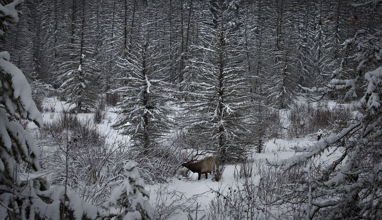 олень в парке, фото