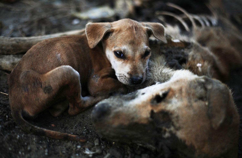 щенок, фото из царства животных