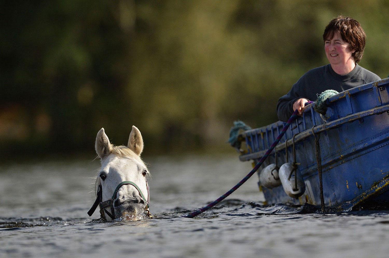 лошадь в озере, фото